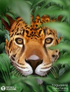 Yaguarete by Ivan Pawluk - Photoshop Creative