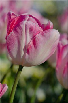 'Romantik' von lisa-glueck bei artflakes.com als Poster oder Kunstdruck $18.03
