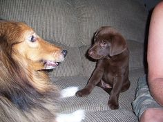 What's up dude?  I'm gonna grow up to be a lot bigger than you, so you better me nice to me now!!