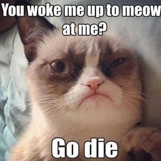 Tardar Sauce, aka the Grumpy Cat, has become an Internet sensation. Here are the best Grumpy Cat meme moments. Gato Grumpy, Funny Grumpy Cat Memes, Funny Cats, Funny Animals, Cute Animals, Funny Memes, Grumpy Kitty, Funniest Animals, Hilarious Jokes