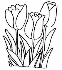 Resultado De Imagen Para Dibujos Girasoles Para Colorear E