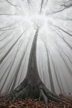 The Forest of Doubt, north of the River Gawain, shrouded in a veil of volcanic ash.
