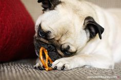 How to Celebrate National Pretzel Day #PretzelDayTip: Toss a few pretzels to fido - dogs love pretzels, too, and they're a great tasty treat for extra-special tricks!