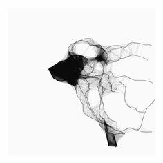 Sheep drawing by Siguni - Aga Ciszewska