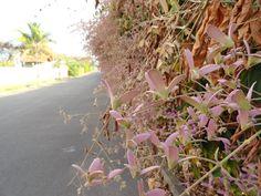 Aula 1 - Plantas/ flores #upis102014