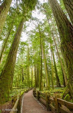 Cathedral Grove in MacMillan Provincial Park is an old-growth forest with trees up to 800 years old - a worthy stop on the drive to Tofino (British Columbia, Canada). Click to learn more.
