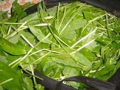 Jak vařit z medvědího česneku   recepty Korn, Pesto, Spinach, Good Food, Food And Drink, Menu, Herbs, Salad, Vegetables