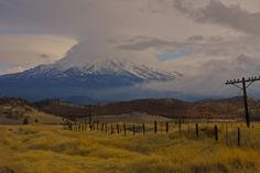 Mt Shasta by Curt Brandhorst