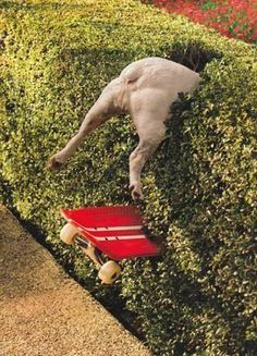 dog, who is skateboarding in the bushes- chien qui fait du skate dans les buissons