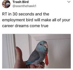 liyaluvs I pinned this just for the bird... It's my career dream be a bird hahaha