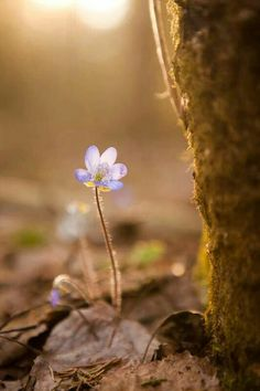Nature spring flowers bokeh new ideas Mother Earth, Mother Nature, Belle Image Nature, Wild Flowers, Beautiful Flowers, Spring Flowers, Cool Pictures, Beautiful Pictures, Amazing Nature
