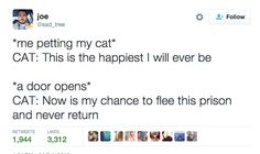 The primary function of the Internet is to philosophize about cats. Here are some of very the finest of those musings.