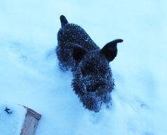 """""""Cold white stuff!  Everywhere!""""  February 23, 2015"""