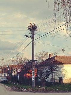 Photo: Predrag Trokicic