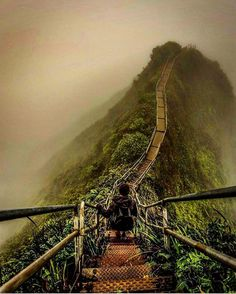Haiku Stairs, Hawaii . . . ➖➖➖➖➖➖➖➖➖➖➖➖➖ #france #indonesia #philippines #wanderlust #usa #canada #dope #tbt #switzerland #landscape #thailand #fujifilm #australia #vscocam #gopro #stunning #singapore #wcw #perfection #turkey #luxury #california #nyc #nikon #canon #outdoors #closeup #italy #norway