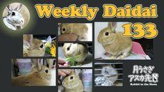 Weekly daidai 133