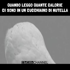 Gufo bianco Nutella Funny, Funny Definition, Minimalist Poster, Funny Images, Quotations, Funny Animals, Laughter, Comedy, Lol