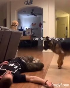 Pupdecure - You are in the right place about Funny comebacks Here we offer you the most beautiful pictures abo - Cute Funny Dogs, Funny Dog Memes, Funny Dog Videos, Funny Video Memes, Funny Animal Memes, Cute Funny Animals, Funny Animal Pictures, Pet Videos, Animal Jokes