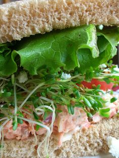 Basil: Search results for salmon
