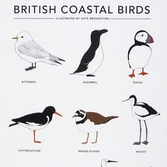 british coastal birds - Google Search