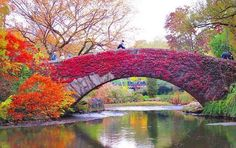 Central Park dresses itself in red and gold, just for you. Central Park dresses itself in red and gold, just for you. Nyc Fall, Autumn In New York, Nyc In The Fall, Central Park Nyc, New York Central, Places To Travel, Places To See, Vacation Places, All Nature