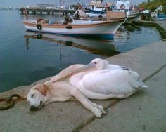 At first, I thought the dog had a growth but then realized it was a bird (of an unknown variety)