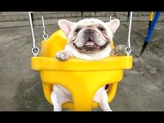Best Of Funny Bulldog Videos Compilation 2016 Bulldogs are awesome. English bulldog, french bulldog, they are all funny dogs and puppies. Check out these funny bulldog videos. Cute Puppies, Cute Dogs, Dogs And Puppies, Doggies, Adorable Babies, Funny Dogs, Funny Animals, Cute Animals, Funny Bulldog