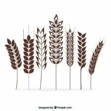 small wheat sheaf vector - Google Search