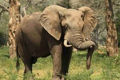ProdAfrica Business Directory connecting Europe and Africa Zimbabwe, North West, Mammals, Tourism, National Parks, Scenery, Wildlife, Elephant, Europe