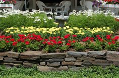 I came across this red-yellow-white color scheme in Woodstock, Vermont, USA and had to have a photo. Geraniums (red), marigolds (yellow), and cosmos (white) do the honors. Get more ideas for color schemes at http://landscaping.about.com/od/galleryoflandscapephotos/ss/Landscape-Color-Schemes.htm