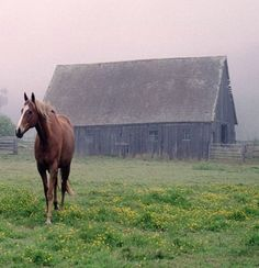 An old,  weathered barn, a horse.... a calm,  foggy summer morning. What a dream.