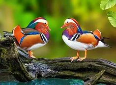 🙋💐🌺❇Happy Day❇ Happy Day, Rooster, Bird, Animals, Google, The World, Birds, Hapy Day, Animales