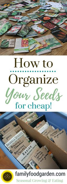 Indoor Vegetable Gardening How to Cheaply Organize your Seeds ~ - Organize seeds with this cheap and easy method. Learn how to organize seeds based on the plant families (plant family guide). Indoor Vegetable Gardening, Hydroponic Gardening, Hydroponics, Organic Gardening, Gardening Tips, Texas Gardening, Veggie Gardens, Gardening Vegetables, Urban Gardening
