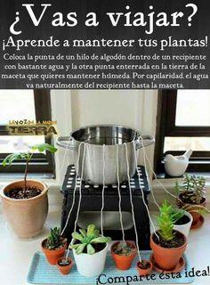 Cómo mantener las plantas hidratadas mientras estas de viaje.