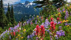 Mountain Meadow Flowers