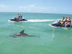 Riding a wave runner with dolphins in Florida! Can never do it enough!