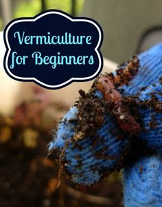 Gardening Compost What is Vermiculture? - Worms For Composting - Natural Living Mamma Garden Compost, Garden Soil, Edible Garden, Permaculture, Organic Gardening, Gardening Tips, Organic Farming, Vegetable Gardening, Red Worms