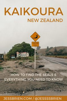 Canterbury Travel, Canterbury New Zealand, Lake Tekapo, Seaside Towns, New Zealand Travel, South Island, Whales, East Coast, Dolphins