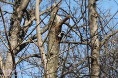 Woodpecker in the trees...