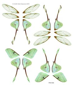 Pre-printed Mini Butterfly and Insect wings for any art/craft application. Fairy Wings Drawing, Butterfly Drawing, Butterfly Fairy, Butterfly Crafts, Butterfly Wings, Butterfly Mobile, Insect Wings, Insect Art, Butterfly Template