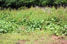 Natural Weed Prevention –Teach One Reach One