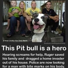Pit bulls can be heroes