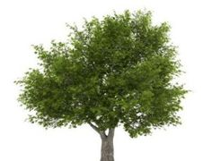 Jam...good info...This guide contains fast growing tree ideas. Sometimes when landscaping we would like to add some fast growing trees to the design.