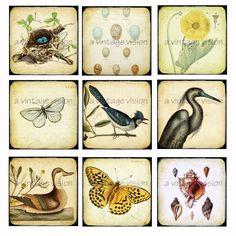 Vintage Prints Botanical ttv Digital collage door avintagevision, $2,50