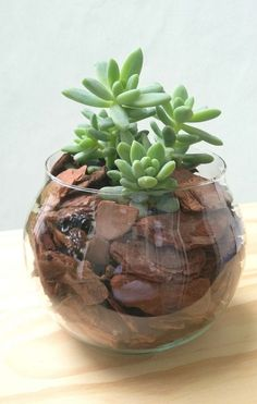7 substratos para plantar suculentas | Como fazer em casa Succulent Gardening, Succulent Terrarium, Planting Succulents, Planting Flowers, Fake Plants Decor, House Plants Decor, Plant Decor, Plants In Glass Bowl, Succulents In Glass
