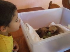 Family Travel Blog for Nomadic World Travel with Kids: 5 Best Places for Kids in Costa Rica