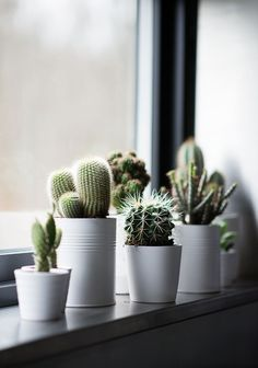 Windowsill decoration - 57 ideas how to discover the potential of the windowsill - window sill decoration cactus plants houseplants - Windowsill Decoration, Decoration Plante, Window Sill Decor, Window Boxes, Plants On Window Sill, Window Ledge, Window Ideas, Vases Decor, Indoor Garden