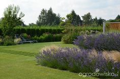 lavandula with stipa with pennisetum modern garden malkul Stipa, Lavandula, Paths, Golf Courses, Garden, Modern, Garten, Trendy Tree, Lawn And Garden