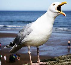 Are seagulls just misunderstood? Beautiful Birds, Animals Beautiful, Feathered Dinosaurs, Ocean Projects, Shorebirds, Oceans Of The World, Colorful Animals, Watercolor Bird, Sea Birds