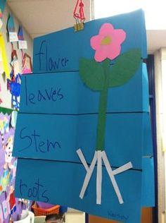 Parts of a Plant Flip Book Thanksgiving Activities For Kindergarten, Thanksgiving Math, Kindergarten Science, Spring Activities, Teaching Science, Science Activities, Science Ideas, Math Games, Preschool Garden